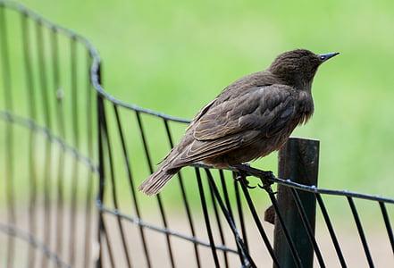 vták, zameraním, Príroda, perie, čierna, pero, zviera