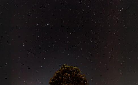 съзвездие, нощ, небе, звездното небе, звезди, дърво