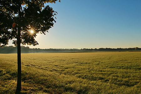 land, feltet, soloppgang, landskapet, landlig, natur, arable