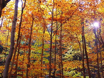 jeseň, Forest, jesenného lesa, stromy, listy, Sunbeam, Príroda