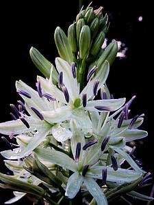 Blüte, Bloom, Blume, Natur, Anlage, Sommer, Frühling
