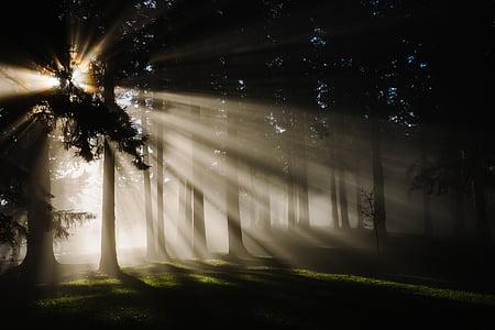 Forest, Príroda, lúčov, stromy