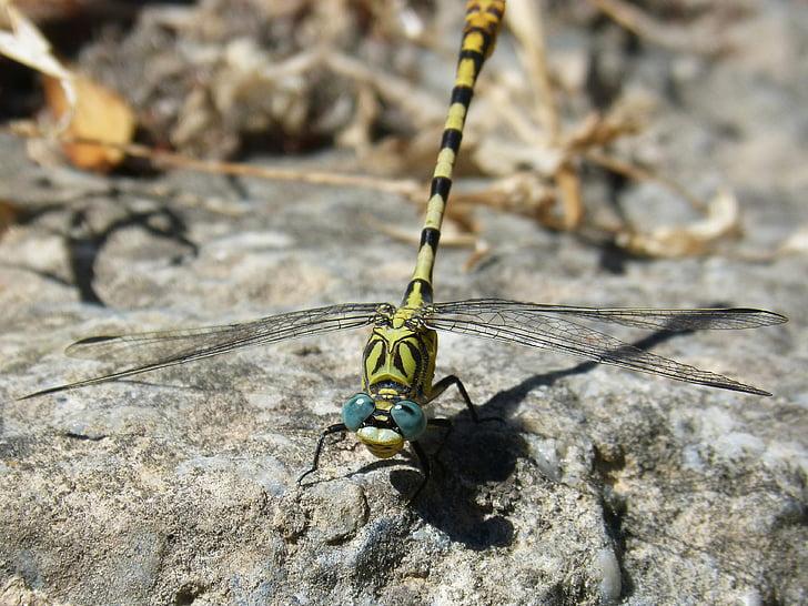 Szárnyas rovarok