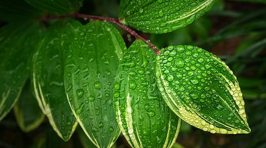 τα φύλλα, φυτά, hwalyeob, φύση, πράσινο, Περίληψη, φύλλο