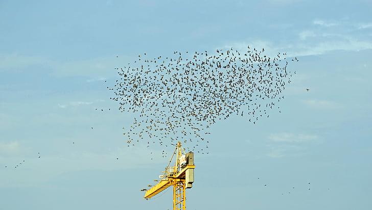 ramat d'ocells, aus migratòries, cel, eixam, volar, Au migratòria, punt de trobada