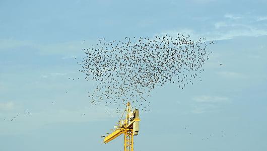 lintuparvi, muuttolintujen, taivas, parvi, lentää, muuttolintu, yhteinen asia