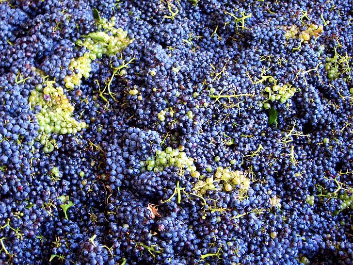 Vintage, viinamarjad, viinamarjasaagist, veini saagi, veini, Prantsusmaa, sinine viinamarjad