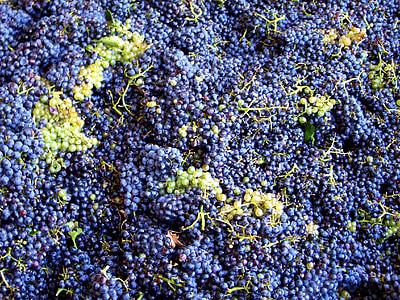 Vintage, hrozno, vinobranie, vinobranie, víno, Francúzsko, modré hrozno
