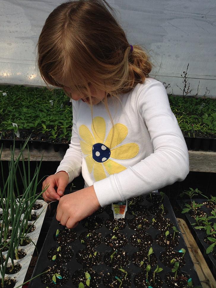 nen plantació, llavors, plantes a partir, hivernacle, propagació vegetal, nen, una persona