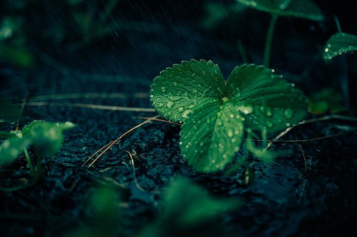 สดใหม่, น้ำ, ใบไม้, โรงงาน, สีเขียว, เขียวขจี, อารมณ์