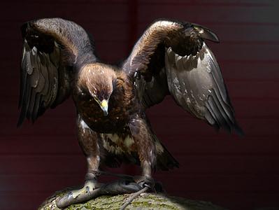 Adler, lintu, eläimet, Linnut, eläinten, Wildlife, Luonto