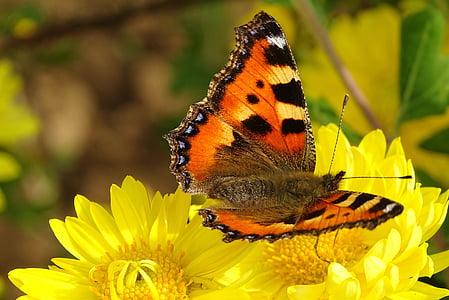 пеперуда, пеперуда, цвете, природата, червен, Блум, лято