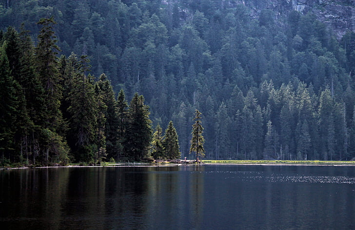 lake, forest, firs, nature, trees, water, nature reserve
