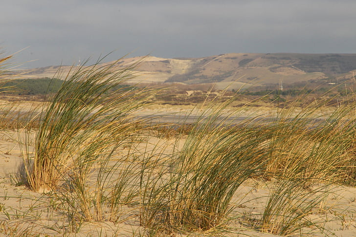 oyats, beach, walk, dunes, panorama, the touquet, france