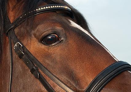 кон, око, затвори, животните, Вижте, едър план, кафяв