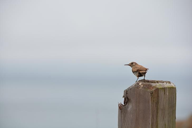 linnud, Vaikse ookeani, loodus, Wildlife, looduslik, Õues, California