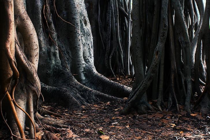 trees, roots, australia, unique, strange, different, landscape