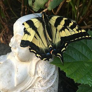 motýl, Buddha, Příroda, Buddhismus, relaxace, křídla, Zlomená křídla