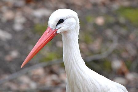 stork, animal, bird, beak
