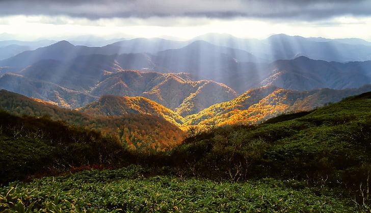 Outono, montanhas, brilho, folhas de outonais, Outubro, Shirakami-sanchi, floresta de faias