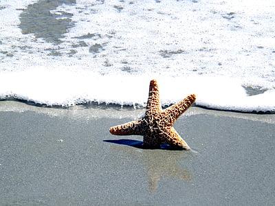 oceà, closca, peix estrella, Mar, l'estiu, platja, viatges