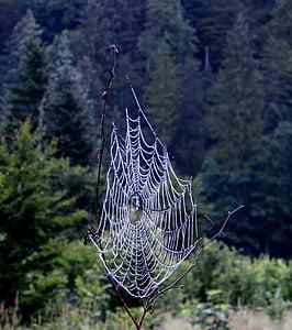 network, dream catcher, mystical, trees, nature, mood, landscape