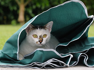 cat, feline, play, parasol, animal, domestic cat, pets