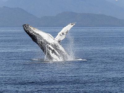 自然の光景, 自然, 哺乳動物, 動物, 野生動物, ジャンプ, ワンダと巨像