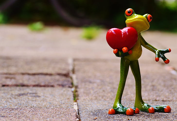 l'amor, dia de Sant Valentí, plantejar, cor, divertit, granota, animal