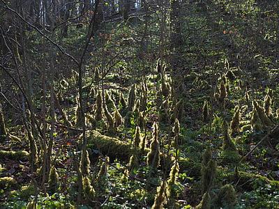 forest, back light, moss, bemoost, forest floor, moss growth, fouling