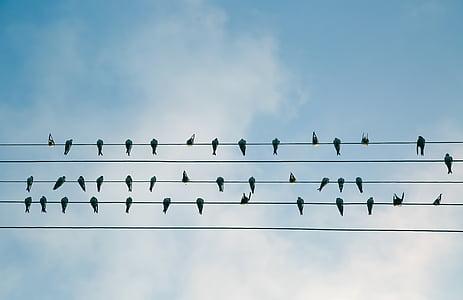 ramat, negre, ocells, ocell, cable elèctric, sobre un fil, en una fila