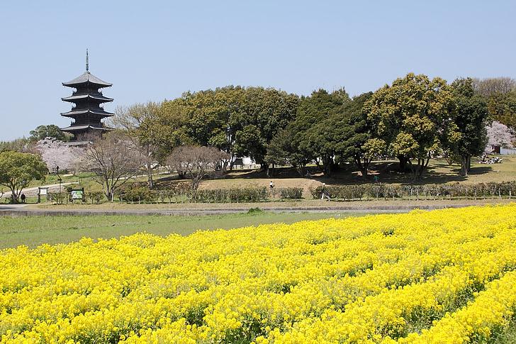 kibi, okayama, rape blossoms, five story pagoda, views of japan, k, temple