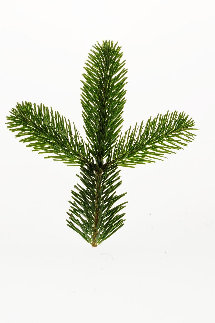 nordmannsgran, Fir, jul, gren, juletræ, dekoration, Fir grøn