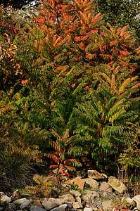 rastlín, kríky, jeseň, červená, Orange, Zelená, kamene