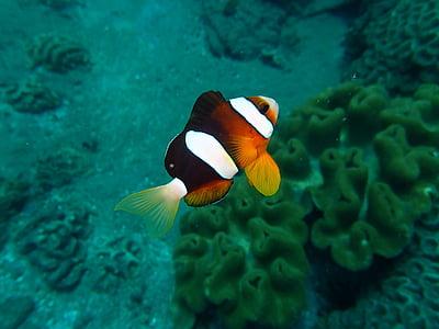 fish, sea, diving, one animal, underwater, sea life, animal themes