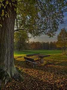 herbsstimmung, automne, feuilles, arbres, nature, forêt d'automne, chemin forestier
