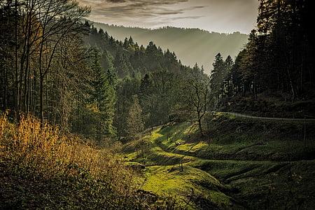 Schwarzwald, daggry, dagslys, miljø, skog, gresset, landskapet