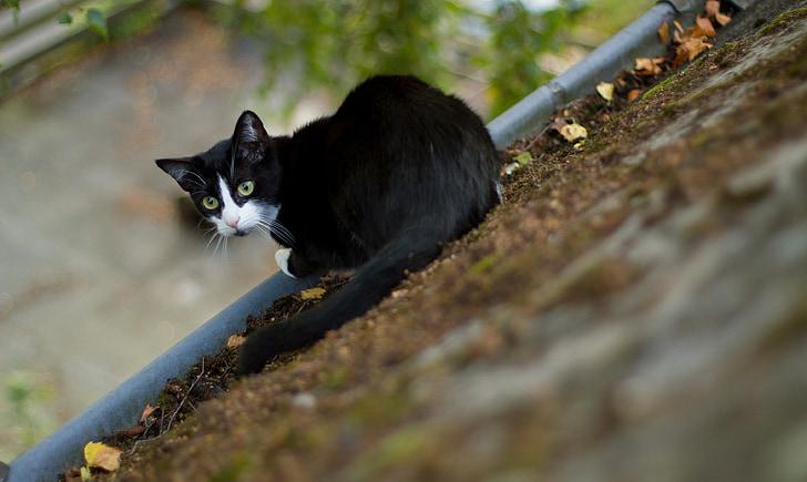 gatto, tetto della casa, animale, animale domestico, tetto, tetti, sedersi