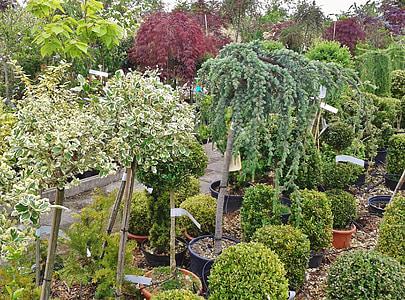 scuola materna, commercio dei fiori, commercio di piante, botanica, pianta, piante da giardino, legno di bosso