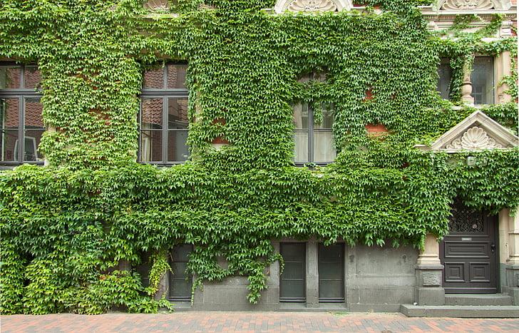 edifici, arquitectura, casa, finestra, incrustacions, vi, soci vi