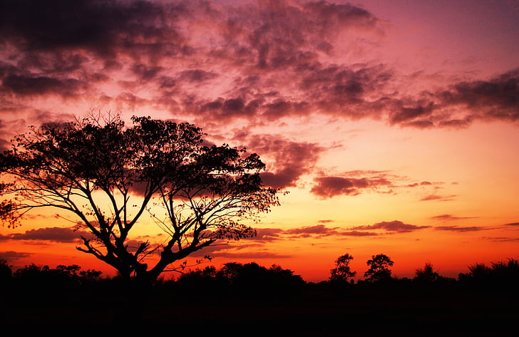 Dawn, skymning, naturen, Utomhus, natursköna, siluett, Sky