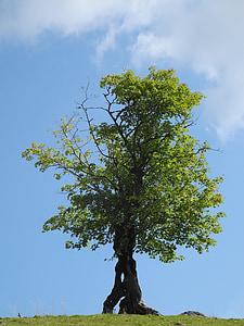 strom, Zelená, starý strom, Zelený strom, Príroda