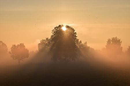 solen, soluppgång, Dessutom, dimma, mysthisch, Vacker, romantiska