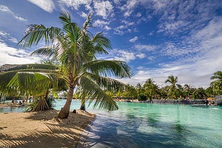 tropical, Mar, blau, vacances, natura, viatges, l'aigua