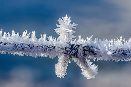 eiskristalle, frost, frozen, cold, ice, crystals, hoarfrost
