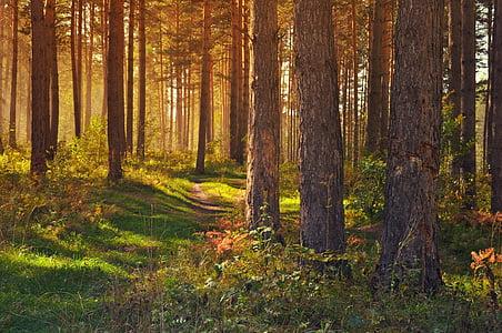 Les, Příroda, krajina, stromy, žlutá, zlato, pohádka