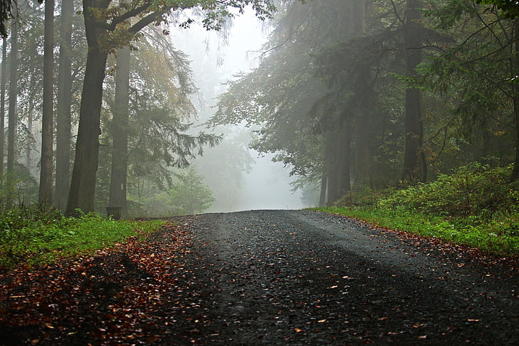 Forest, suite, brouillard, chemin forestier, arbres, sentier, Taunus