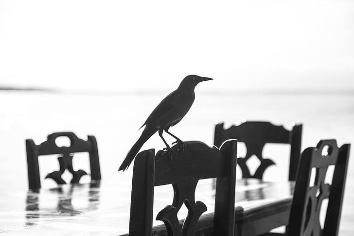 životinja, ptica, crno-bijeli, stolice, kolac, silueta, Tablica