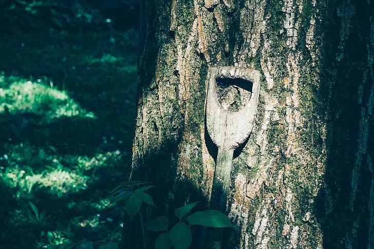 arbre, natura, mànec de la pala, manejar, fusta, registre, arbre vell