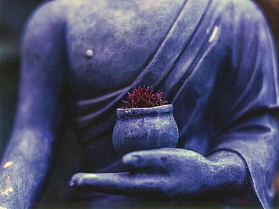 Buddha, növény, vallás, buddhizmus, buddhista, ima, vallási